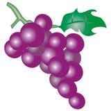Purpere druiven stock illustratie