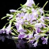 Purpere eetbare bloemen stock fotografie