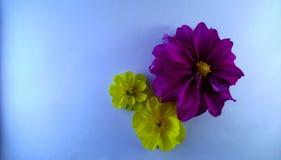 Purpere en Gele bloemen op de blauwe geweven achtergrond royalty-vrije stock afbeeldingen