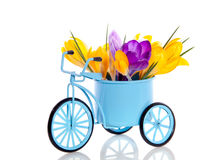 Purpere en gele krokusbloemen Stock Foto's