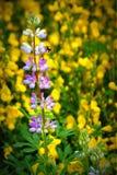Purpere en gele wildflowers Stock Afbeeldingen
