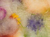 Purpere en oranje bloemen Royalty-vrije Stock Fotografie