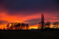 Purpere en oranje Zonsondergang achter Bomen, Duitsland Stock Afbeeldingen