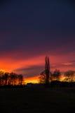 Purpere en oranje Zonsondergang achter Bomen, Duitsland Stock Foto's