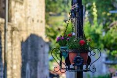 Purpere en rode bloemen Royalty-vrije Stock Foto