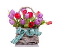 Purpere en rode tulpen Royalty-vrije Stock Afbeelding