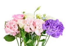 Purpere en roze anjers en rozen Royalty-vrije Stock Afbeelding