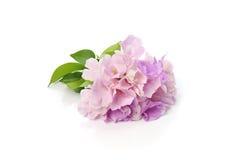 Purpere en roze bloemen op witte achtergrond Royalty-vrije Stock Afbeelding