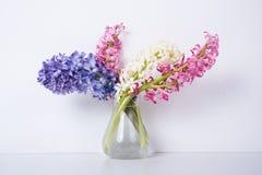 Purpere en roze hyacintbloemen Stock Foto's