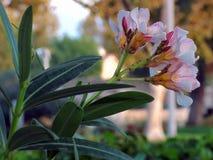 Purpere en witte bloemen 2 Royalty-vrije Stock Afbeeldingen