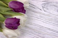 Purpere en witte tulpen op een witte houten achtergrond De dag van de vrouw 8 Maart royalty-vrije stock afbeelding