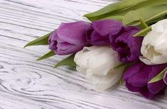 Purpere en witte tulpen op een witte houten achtergrond De dag van de vrouw 8 Maart Stock Afbeelding