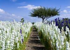 Purpere en witte wildflowers Stock Foto's