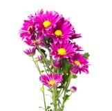 Purpere Flora royalty-vrije stock foto's