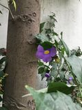 Purpere flora royalty-vrije stock foto