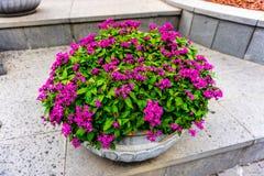 Purpere gekleurde bloemen stock fotografie