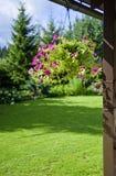Purpere geranium royalty-vrije stock foto