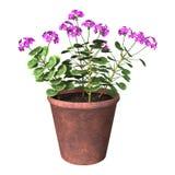 Purpere Geraniumpot op Wit Royalty-vrije Stock Afbeelding