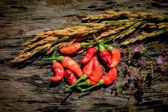 Purpere Gouden de rijst Houten achtergrond van de bloemen Rode Spaanse peper Royalty-vrije Stock Foto's