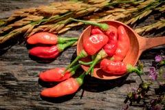 Purpere Gouden de rijst Houten achtergrond van de bloemen Rode Spaanse peper Royalty-vrije Stock Afbeelding