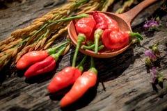 Purpere Gouden de rijst Houten achtergrond van de bloemen Rode Spaanse peper Stock Foto's