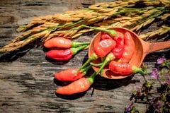 Purpere Gouden de rijst Houten achtergrond van de bloemen Rode Spaanse peper Stock Afbeelding