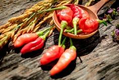 Purpere Gouden de rijst Houten achtergrond van de bloemen Rode Spaanse peper Stock Fotografie