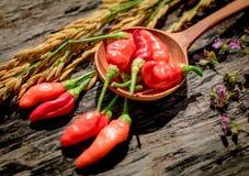 Purpere Gouden de rijst Houten achtergrond van de bloemen Rode Spaanse peper Royalty-vrije Stock Foto