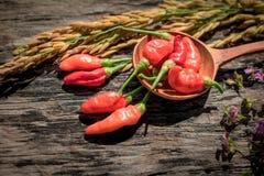 Purpere Gouden de rijst Houten achtergrond van de bloemen Rode Spaanse peper Royalty-vrije Stock Afbeeldingen