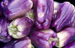 Purpere groene paprika's op vertoning Stock Foto's