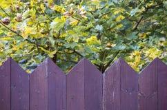Purpere houten omheining Stock Foto's
