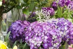 Purpere hydrangea hortensia houten plaque in Russisch 8 Maart Royalty-vrije Stock Foto's