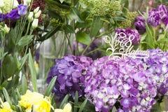 Purpere hydrangea hortensia houten plaque in Russisch 8 Maart Royalty-vrije Stock Fotografie