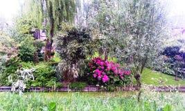 Purpere hydrangea hortensia in tuin, Holland, Nederland royalty-vrije stock foto