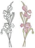 Purpere Iris Stock Illustratie