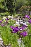 Purpere iris, Wilmington-Arboretum Royalty-vrije Stock Fotografie
