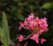 Purpere kleine orchideeën Stock Foto's