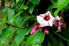 Purpere Kleuren van Mooie bloemen in natuurreservaat op blad op de groene tuinachtergrond Stock Foto