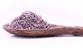 Purpere lavendel Stock Fotografie