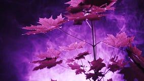 Purpere Lichten in het Bos stock video