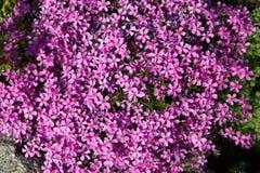 Purpere lilac achtergrond royalty-vrije stock fotografie