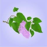 Purpere Lilac tak met bloemen en bladerenvector Royalty-vrije Stock Foto