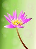 Purpere lotusbloem stock illustratie