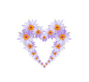 Purpere lotusbloembloem of waterleliebloemen gevormd hart Royalty-vrije Stock Afbeelding