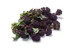 Purpere ontspruitende broccoli Stock Foto