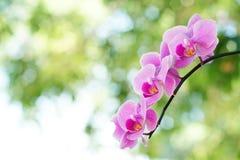 Purpere orchideeën tegen groene bokeh Royalty-vrije Stock Afbeeldingen