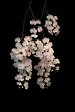 Purpere orchidee royalty-vrije stock foto