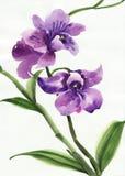 Purpere orchidee vector illustratie