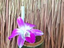 Purpere orchidee met watercilinder Stock Afbeeldingen