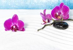 Purpere orchidee?n stock afbeeldingen